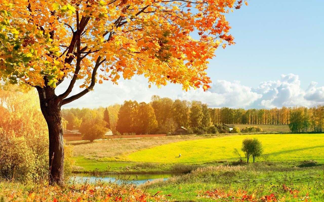 rabstol_net_autumn_48